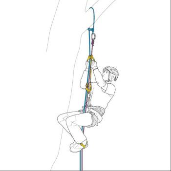 Petzl - Ascentree Doppelsteigklemme